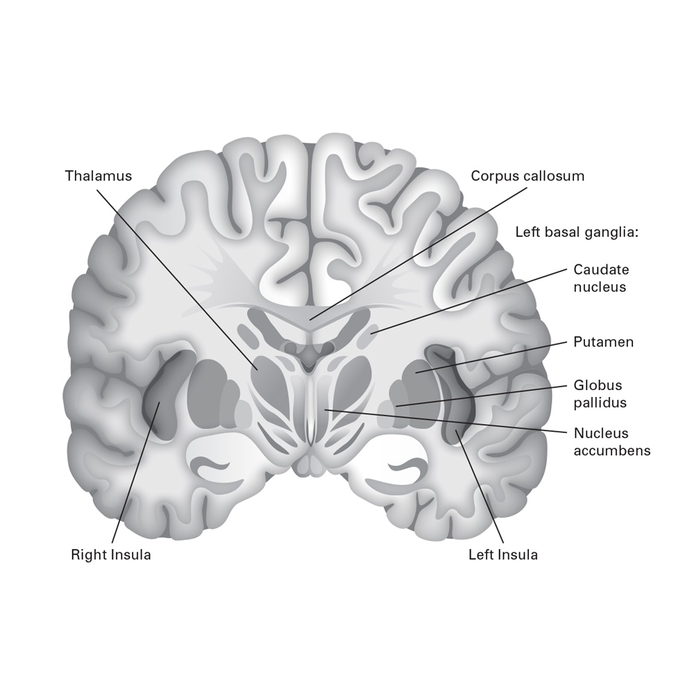 Medical Illustration 2