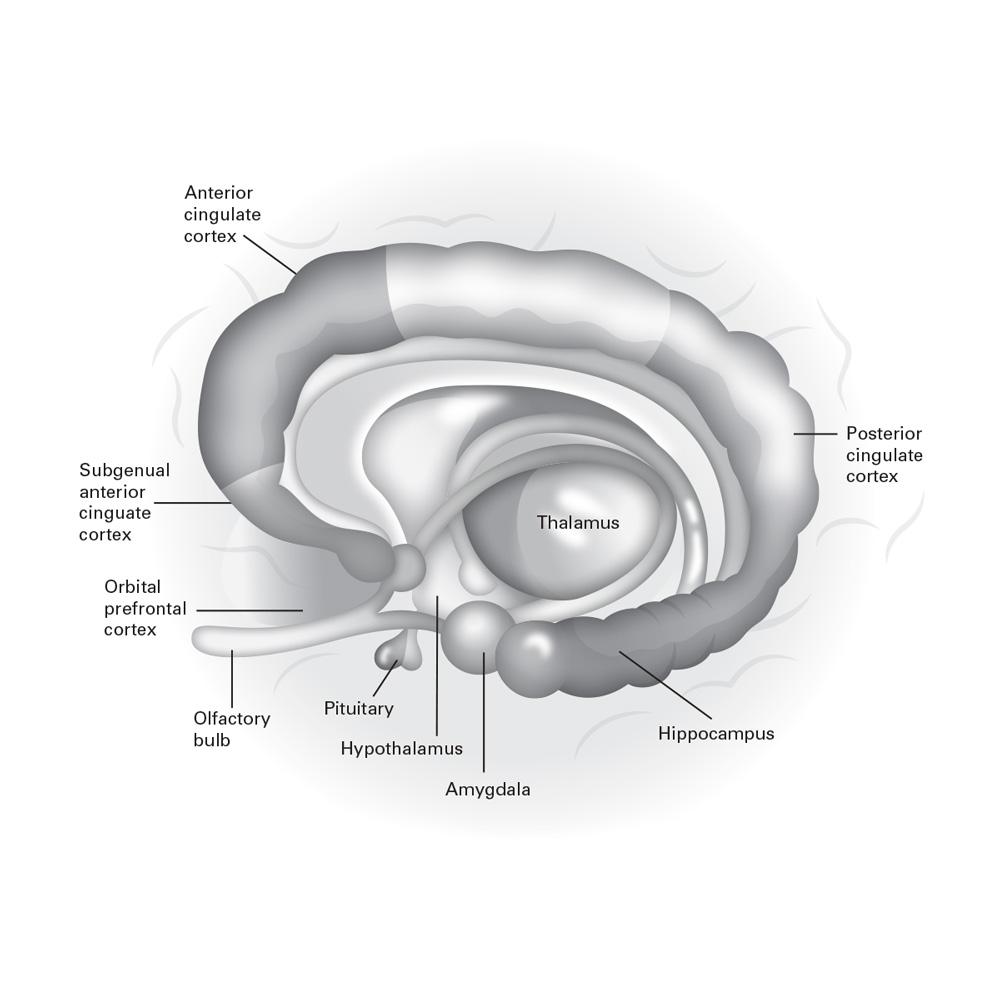 Medical Illustration 3